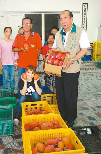 台南農業局長李朝塘(右), 昨天與果農一起採收今年首批太陽果。 圖/農業局提供