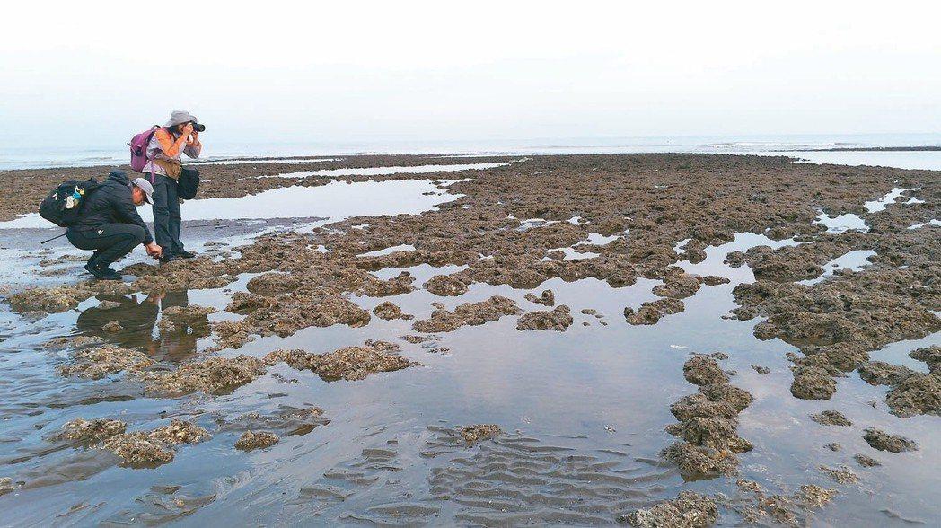 「觀塘換深澳」引發熱議,觀塘附近的藻礁生態保育問題仍待解決。 記者黃昭勇/攝影