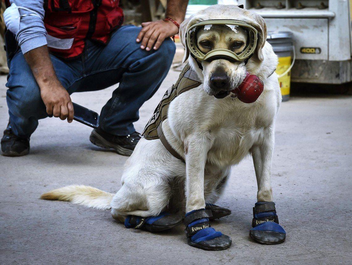 「她的聲音,永遠帶來希望。」墨西哥著名搜救犬 Frida,服役長達9年之後,在2...