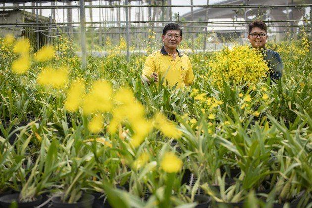 台灣文心蘭在陳文懃、陳宏志父子手中,讓台灣文心蘭切花能夠獨佔日本進口市場。