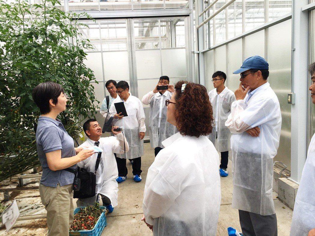 日方人員向參訪團解說溫室生產小番茄技術。 嘉大/提供