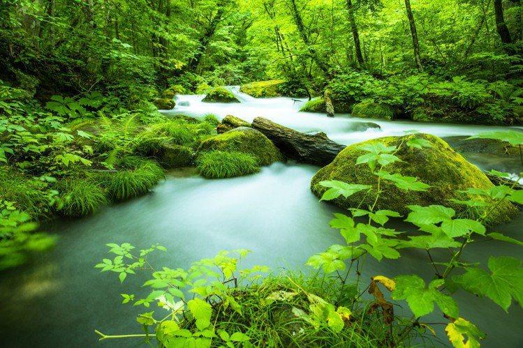 位於青森縣十和田市的奧入瀨溪流,曾入選「日本珍貴苔蘚森林」。圖/樂天旅遊提供