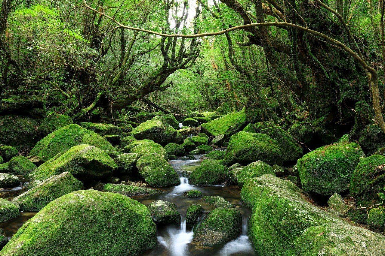 由數百種苔類所覆蓋的白谷水雲峽,是動畫電影「魔法公主」取材點。圖/樂天旅遊提供