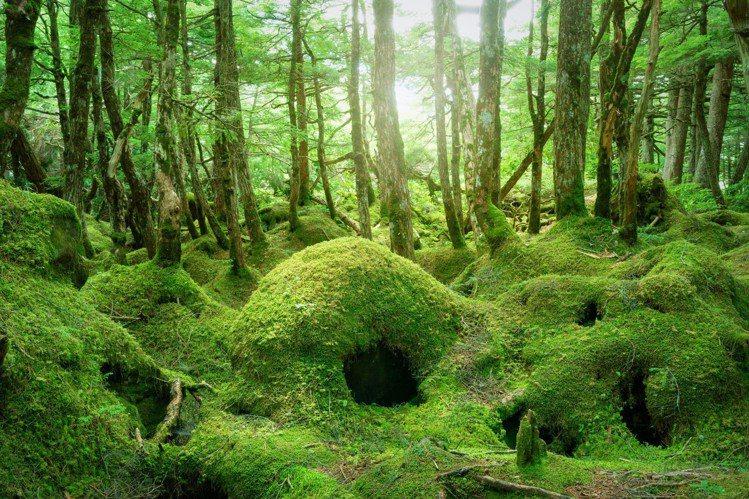 白駒之池周圍孕育超過480種苔癬,深受戶外苔癬迷喜愛。圖/樂天旅遊提供