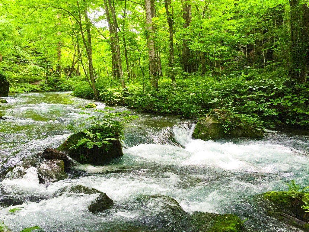 夏季的奧入瀨溪是日本知名的避暑勝地。雄獅旅遊/提供