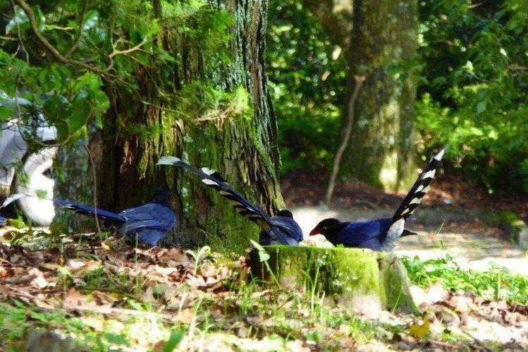 奧萬大國家森林遊樂區推出門票優惠。圖/南投林管處提供