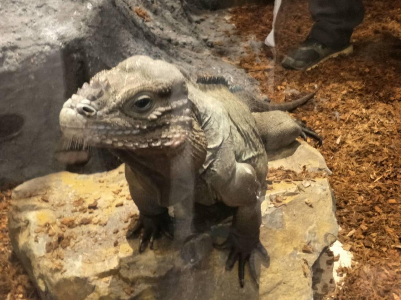 海科館自今天起到10月27日舉行「登陸。作戰-兩棲爬蟲動物特展」,展出包含35種...