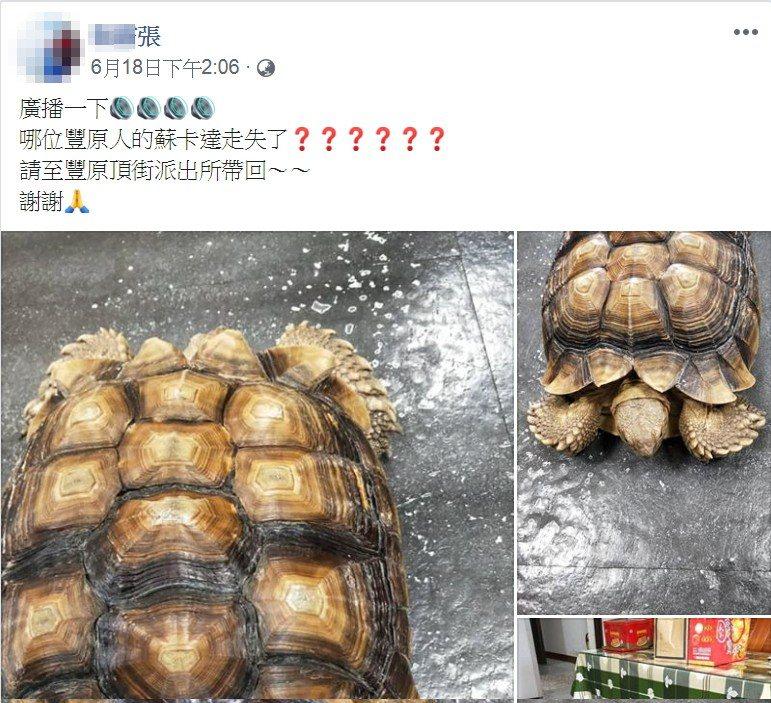 巡佐謝慶儒請同樣愛好烏龜的張姓友人PO網,順利找到迷途的陸龜飼主。記者林佩均/翻...