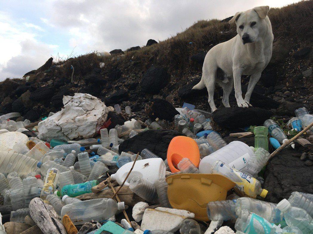 若不改變日常習慣,從源頭減量,再多的淨灘活動依然無法減少海岸的廢棄汙染。 圖...