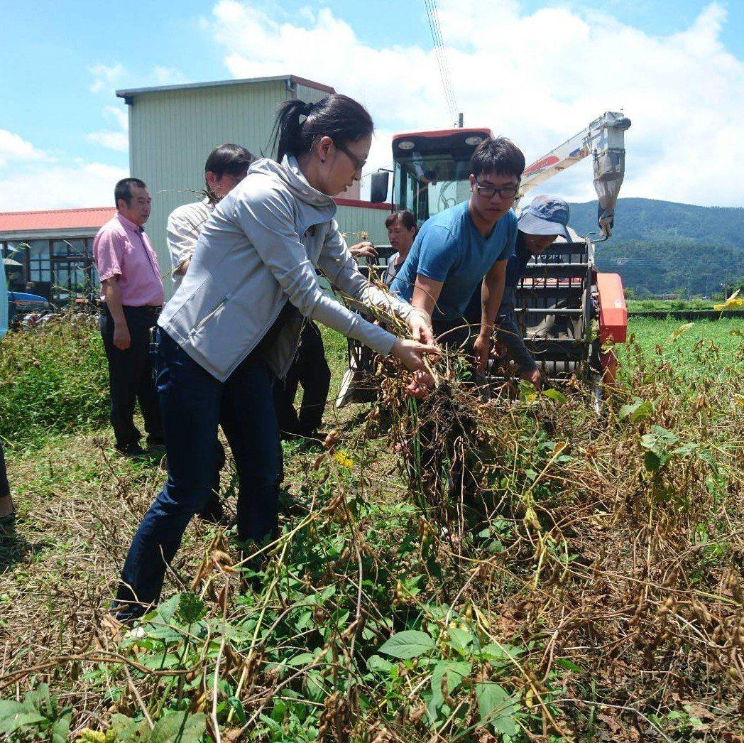 往年宜蘭地區大豆採收均以人工方式進行,一個人手採1分地至少要6天。記者羅建旺/攝...