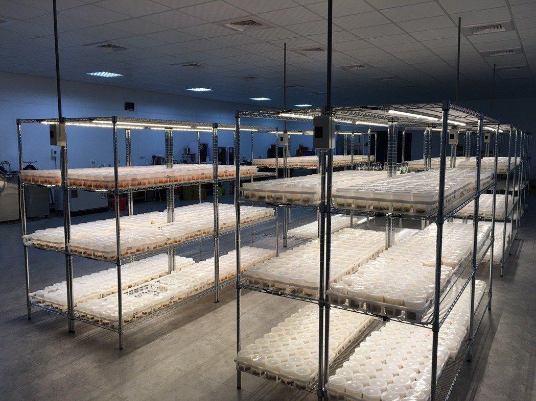 明谷團隊擁有光電及室內環控背景,還有硬體與設備專長。 明谷生技/提供
