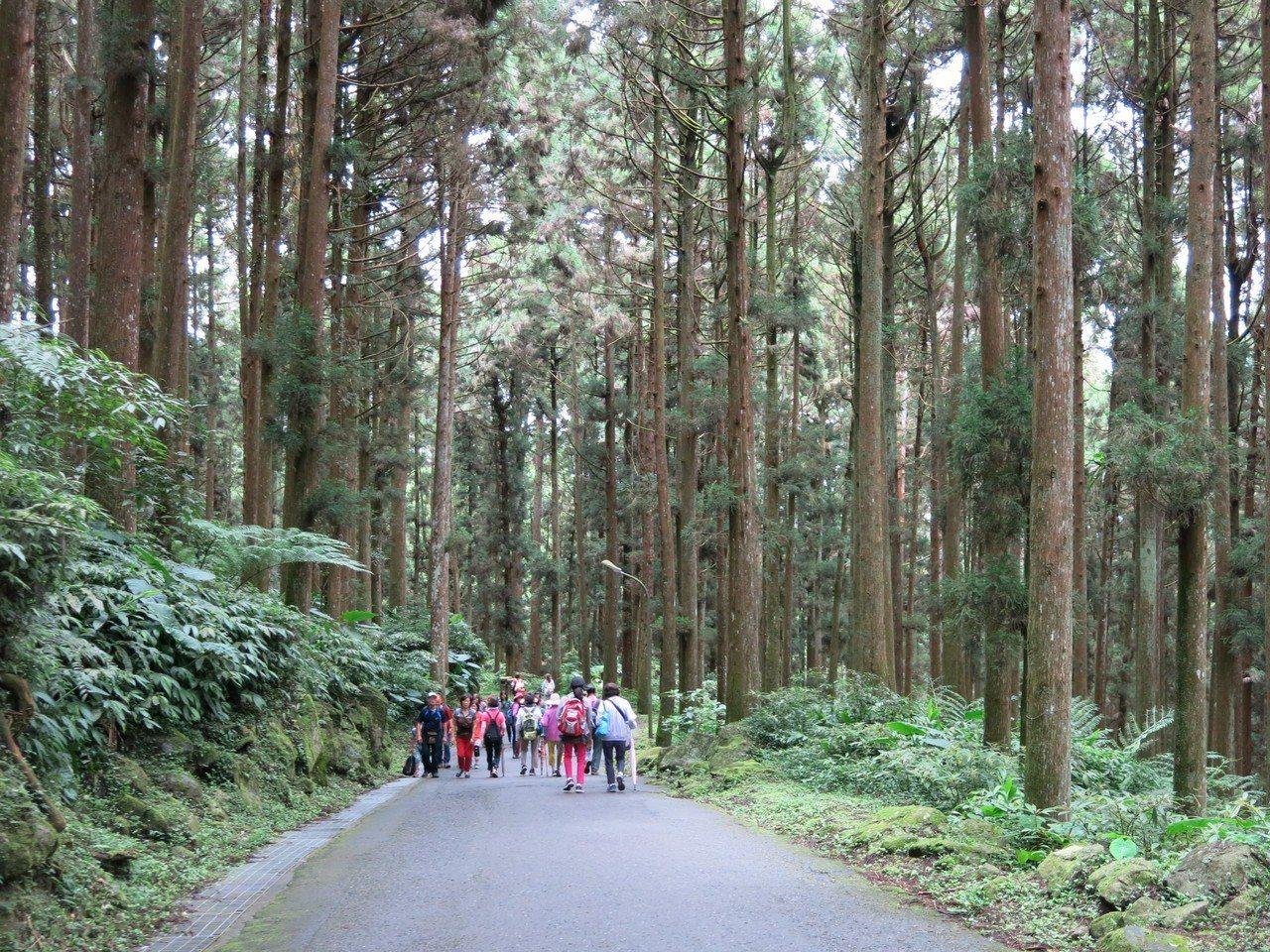 溪頭巨大的柳杉林,是國人最愛森呼吸的景點,慶祝台大實驗林設處70年,7月1日當天...