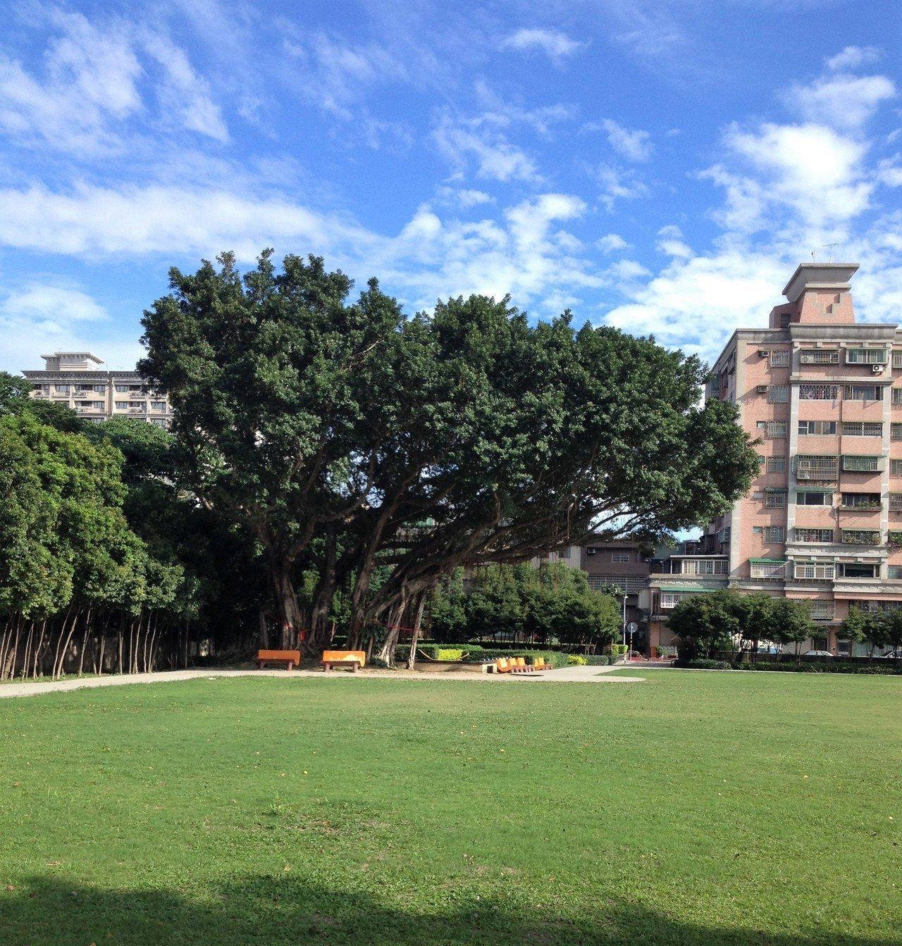 融合建築與老樹 樹林藝文大樓創造都市綠帶新地標