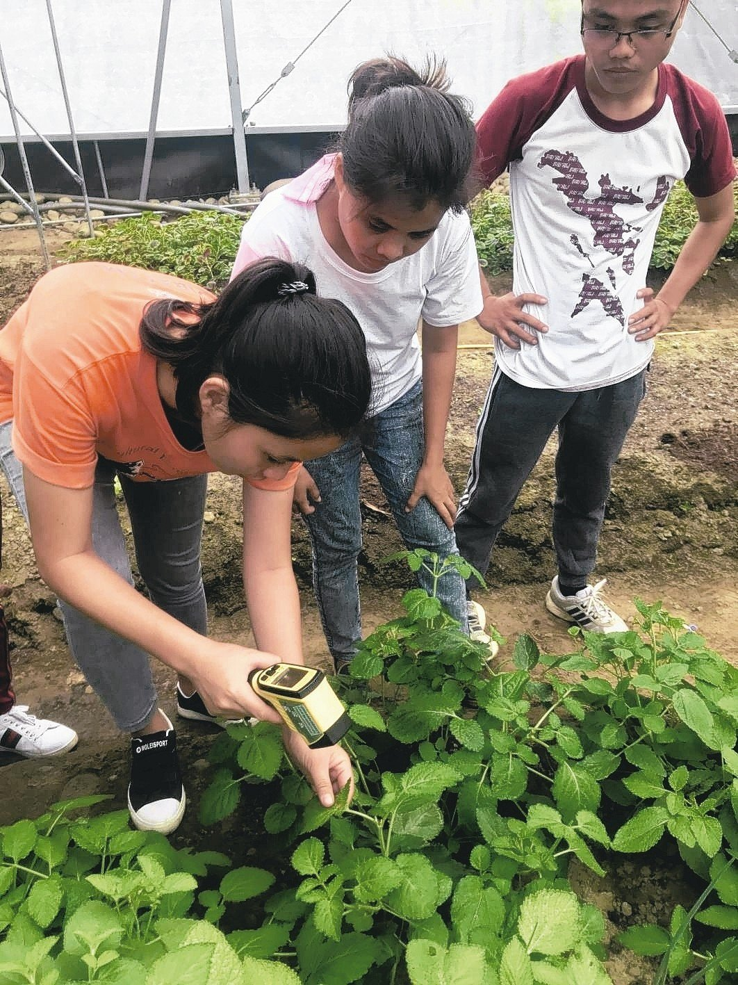 高雄市農業局說,未來希望以新南向為目標,把示範溫室整廠輸出,今年已培訓菲律賓4位...