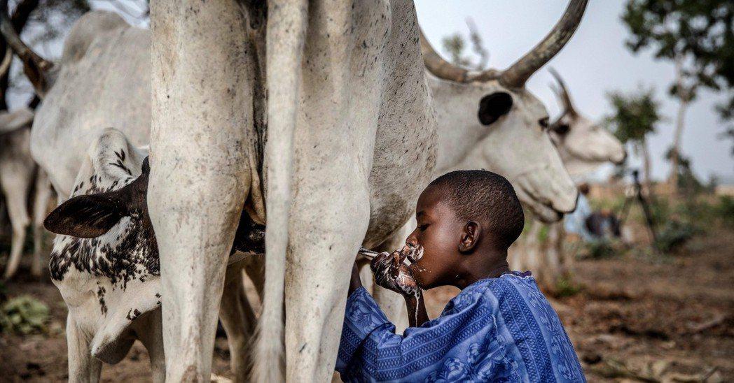若AfCFTA成功實施,預計到2040年,非洲內部農產品貿易將增長20至30%,...