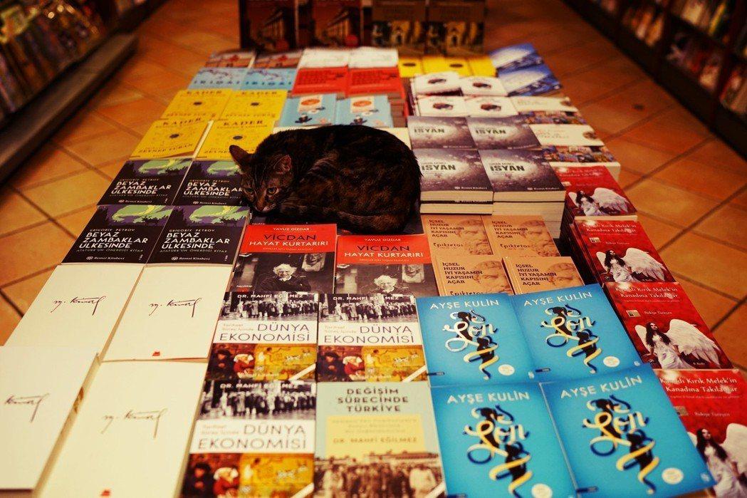如果《翡翠公寓》一書涉嫌猥褻罪,當年政府為什麼核准?土耳其文化觀光局回應:這是兩...