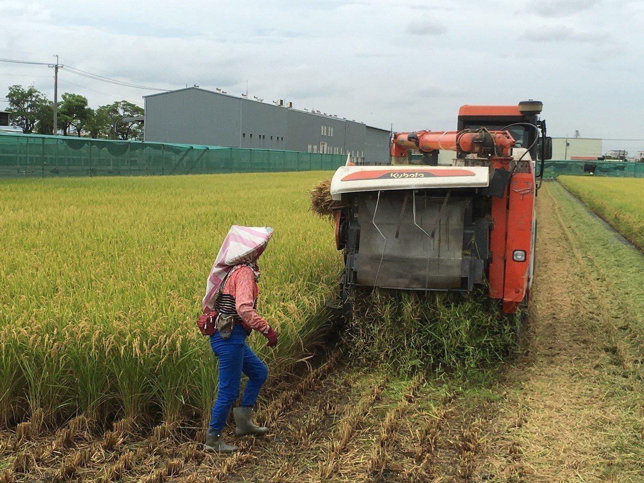 農委會與保險公司推出「水稻區域收穫農作物保險」,2017年二期稻作試辦至今,雲林...