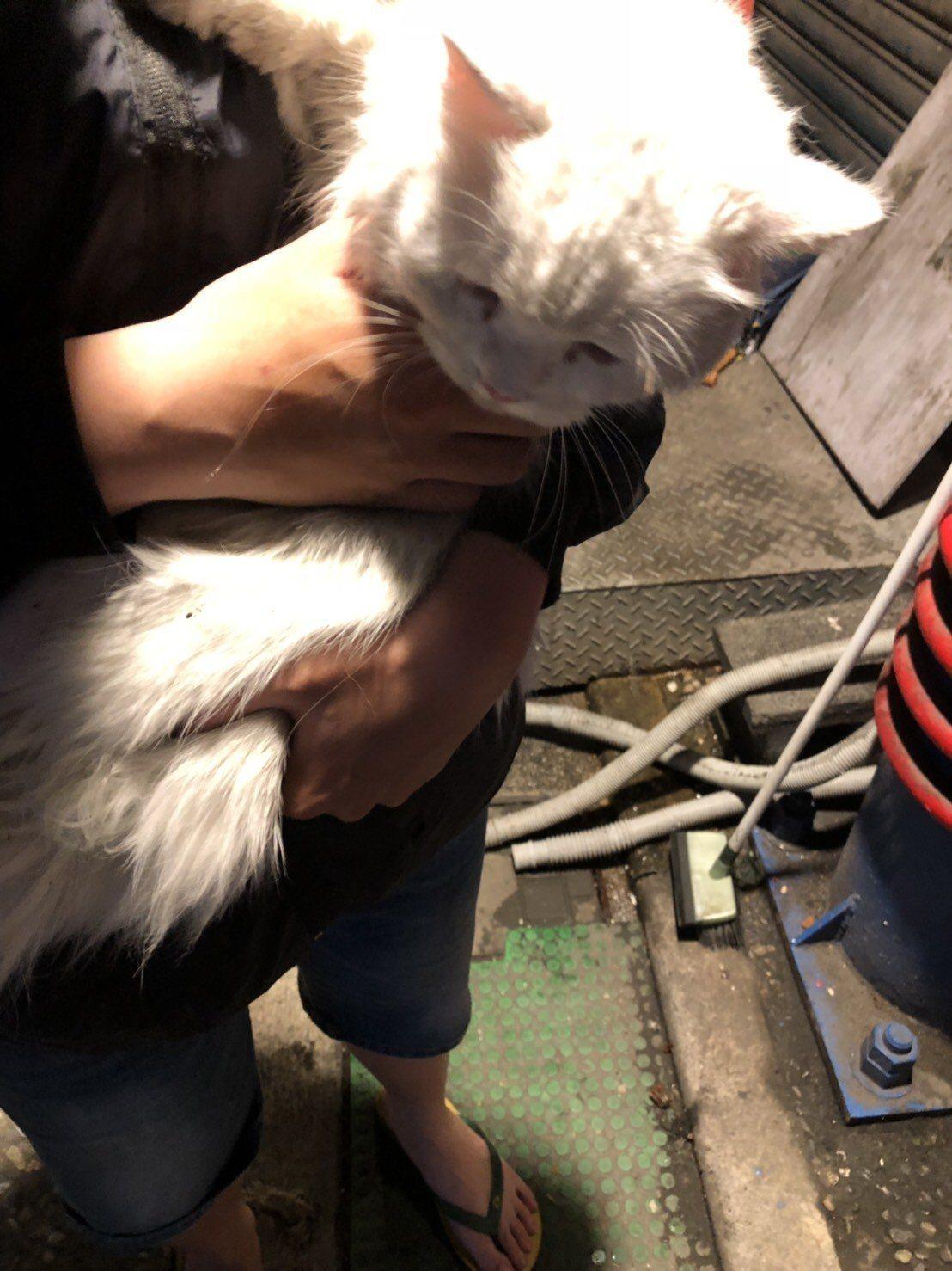 阮女向新店警方報案表示她家貓咪走丟了,盼警方能協助尋找,而警方也在獲報後立即協助...