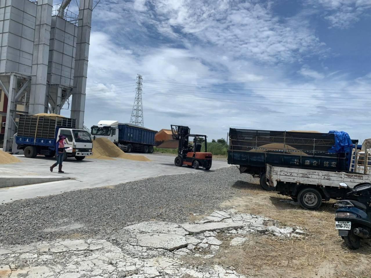 今年軟秈搶種造成崩盤 彰化縣4大糧商進場收購護盤