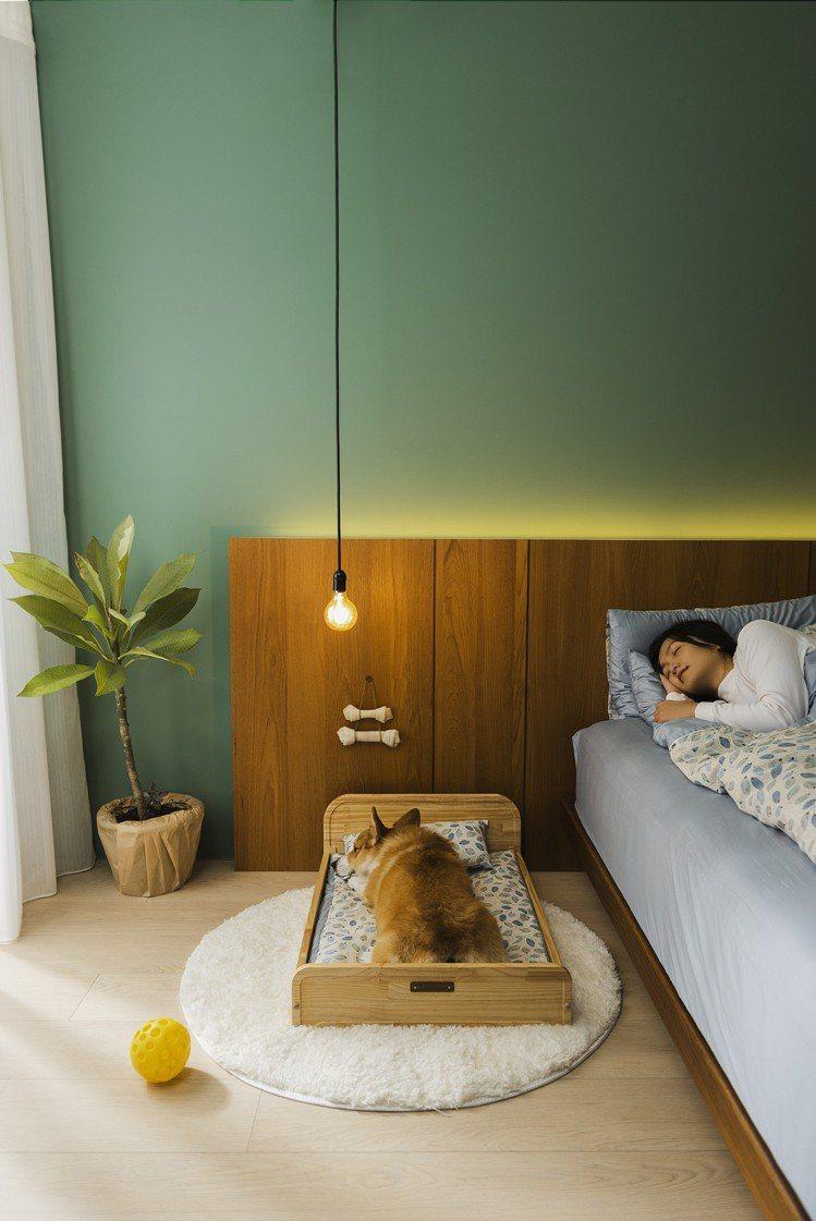 拍拍寵物木眠床,M號售價2,960元、L號售價3,760元,HOLA「Pets專...