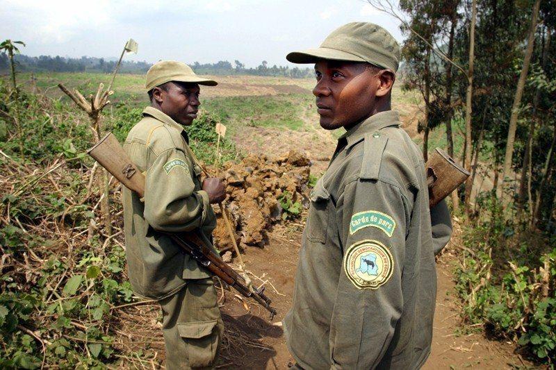 剛果維龍加國家公園裡的野生動物巡守員,保護野生動物如黑猩猩等免受非法盜獵及殺害。 圖/美聯社