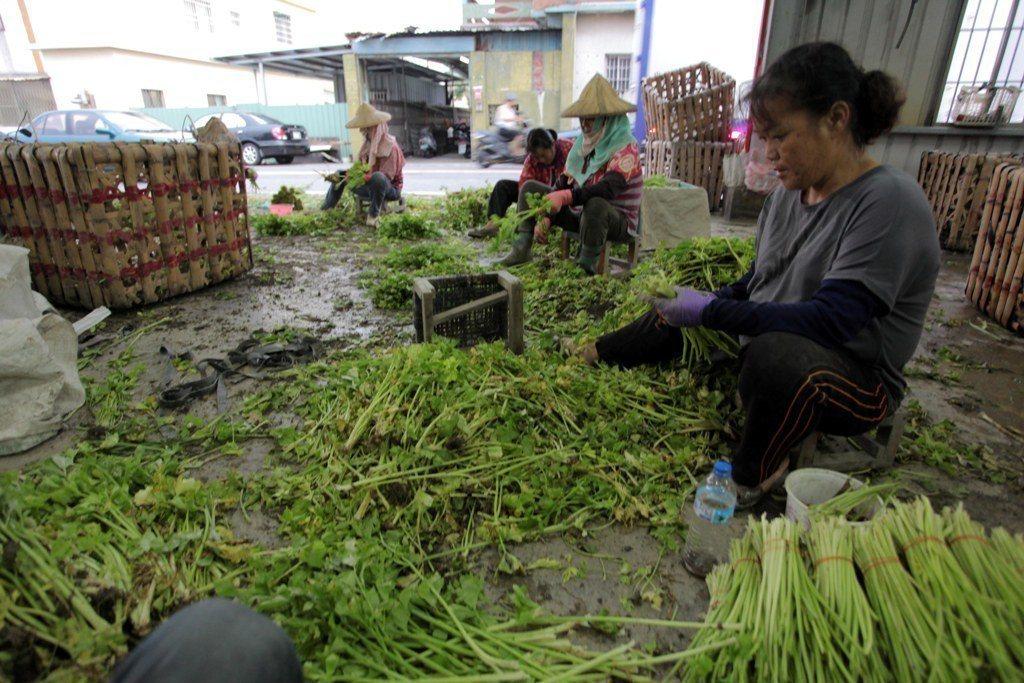 至少20%的蔬果在上貨架前,就因為賣相不佳、經過碰撞、有損壞等原因被丟棄。  圖...