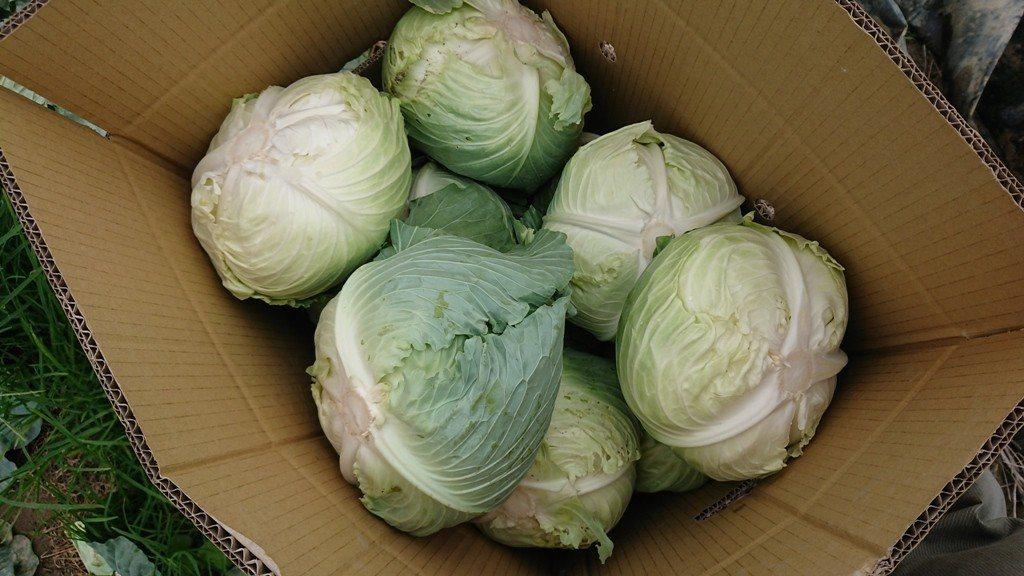 Misfits Market包裝蔬果的環保紙箱,則是用水沖洗就會自然溶解的環保材...