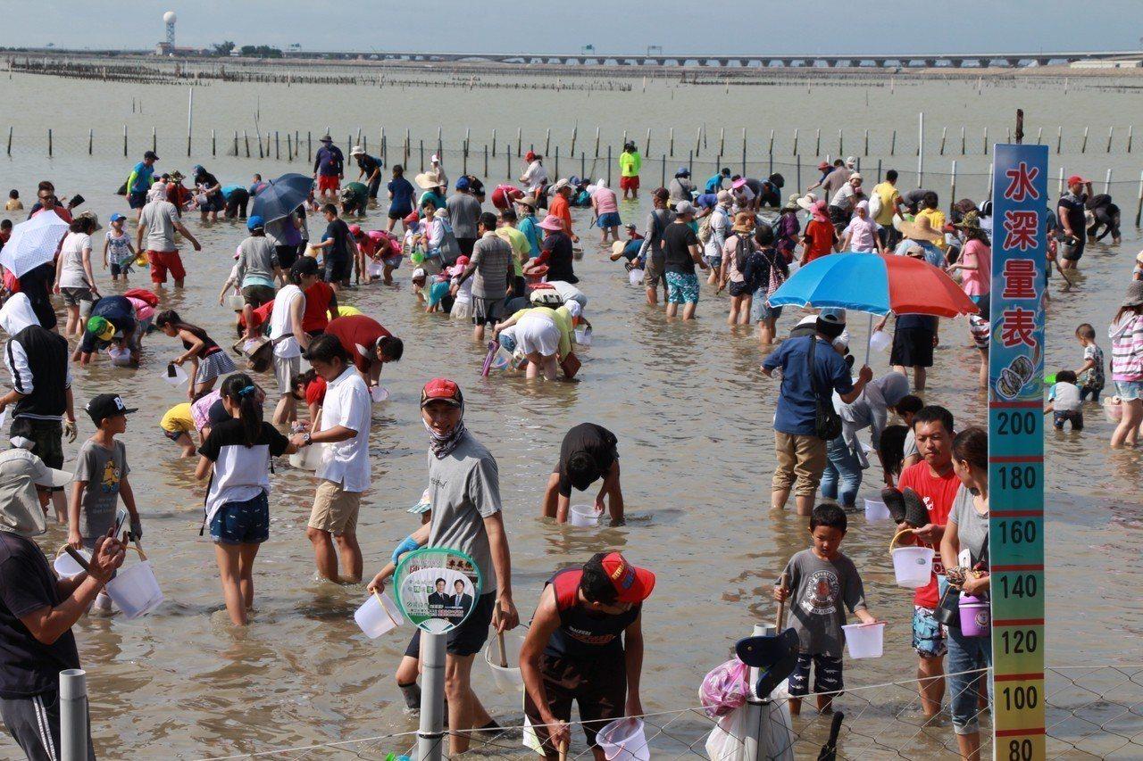 每年夏季最受歡迎的七股海鮮節摸文蛤活動登場。圖/交通局提供