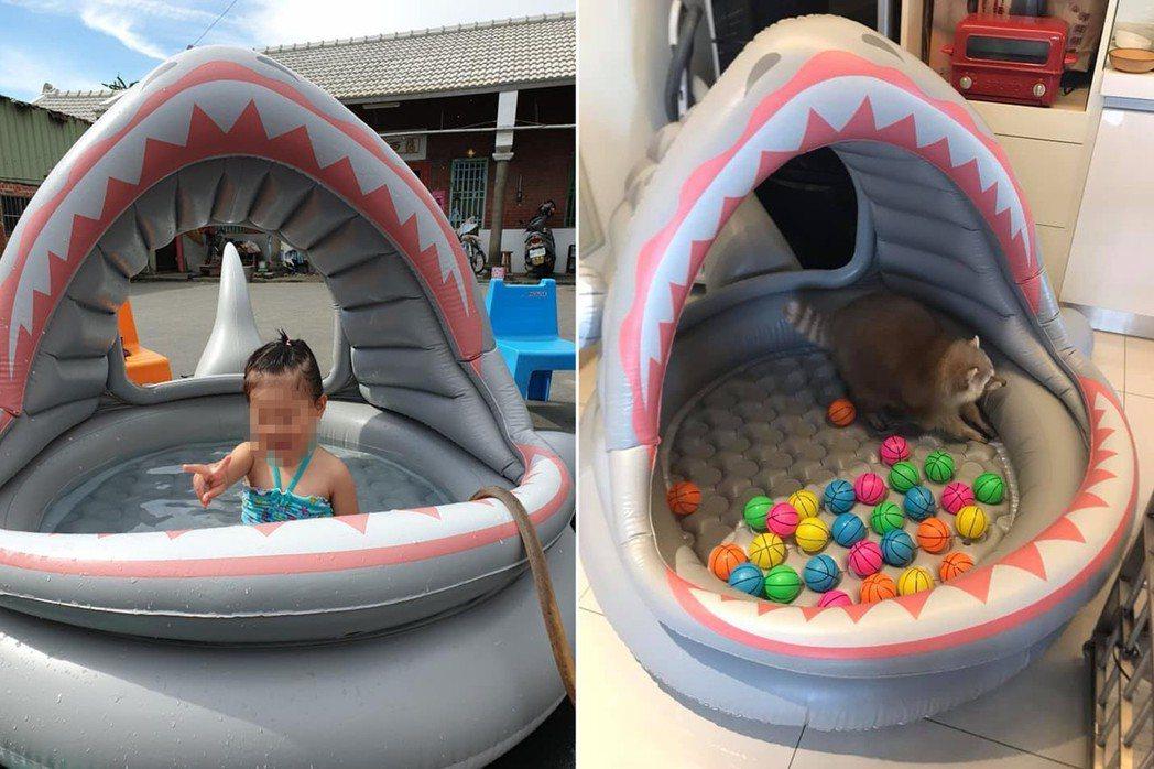 有網友一樣用嘴吹起造型魚泳池。 圖片來源/爆廢公社