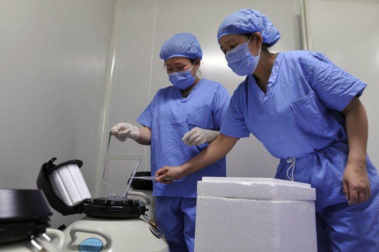 醫生將受精卵放入液氮中冷凍儲存。中新社