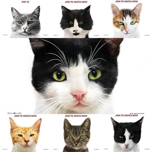 《愛貓之城kedi》中的七位主角。
