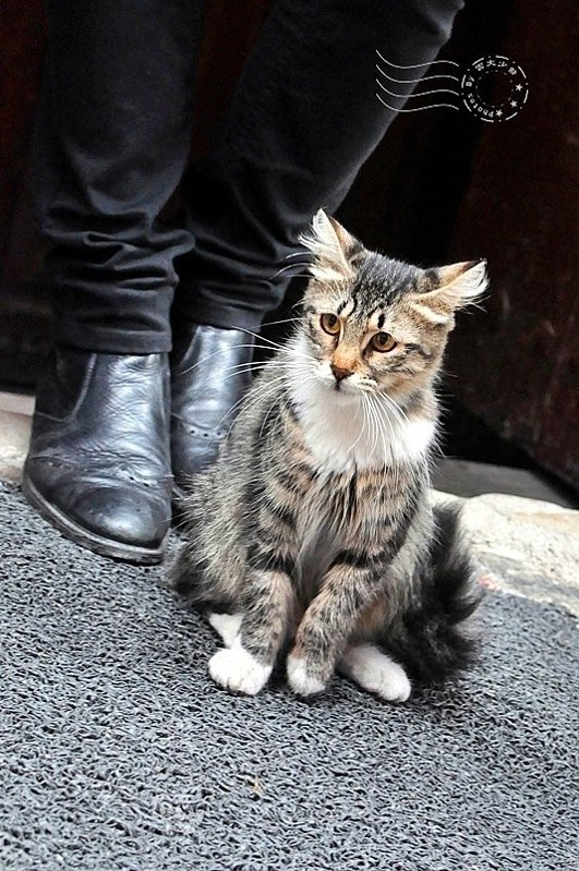 相當漂亮優雅的貓。