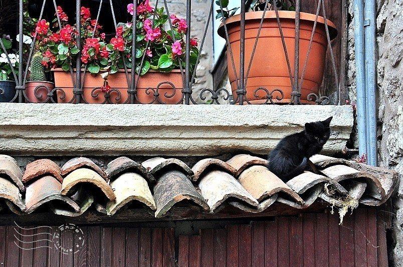 屋頂上的黑黑小奶貓。
