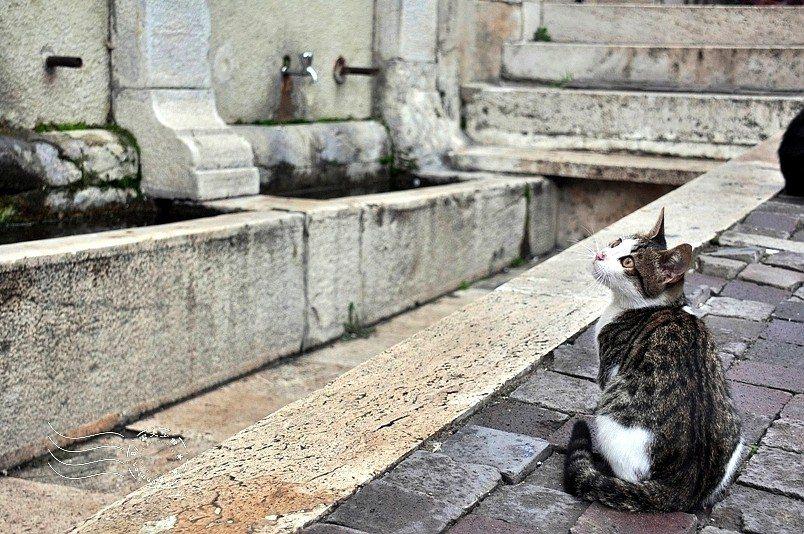 清真寺旁,正跟鴿子對峙的貓。