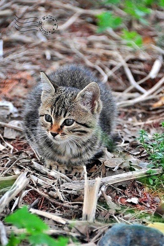 不意外的,還是有貓的蹤跡。