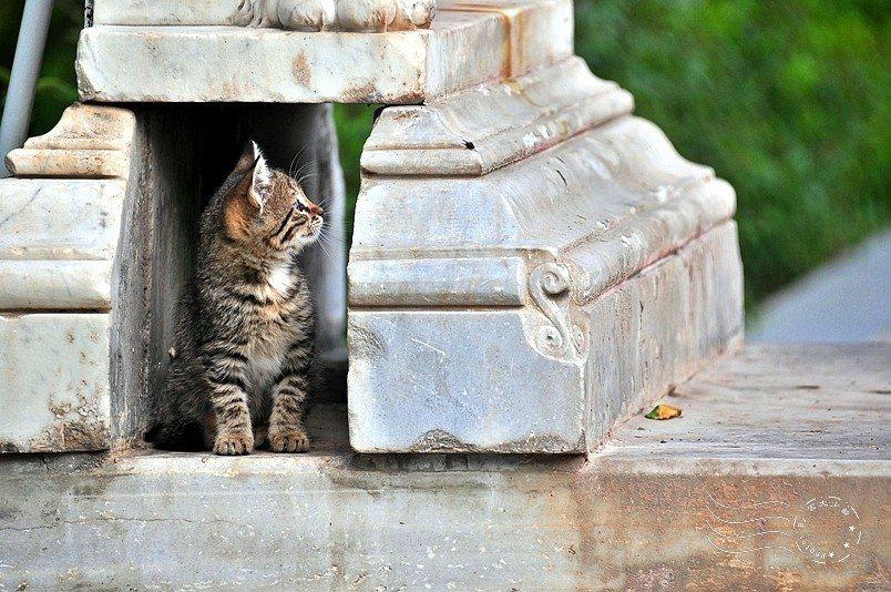 幼貓超可愛。