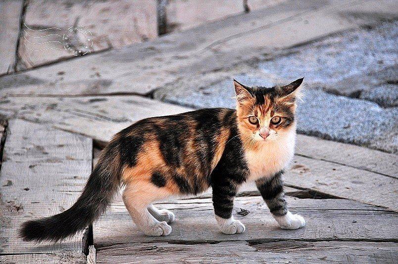 一進入口,馬上看見貓。