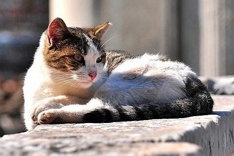 愛貓之國/土耳其,一個被喵星人統治的國度