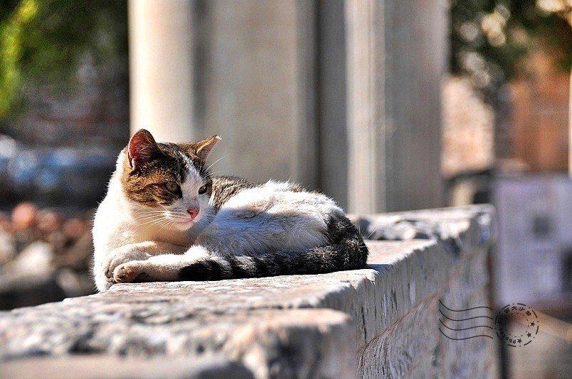 躺臥於世界文化遺產上的偉大喵皇啊!