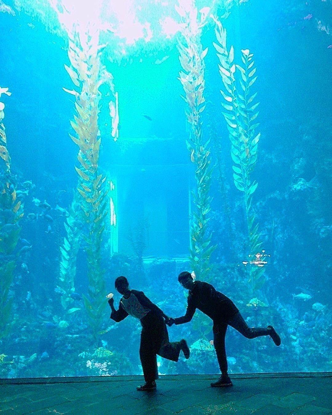 屏東海生館點開海生館IG曬圖的打卡照,發現世界水域館的巨藻缸前各式各樣的唯美剪影...