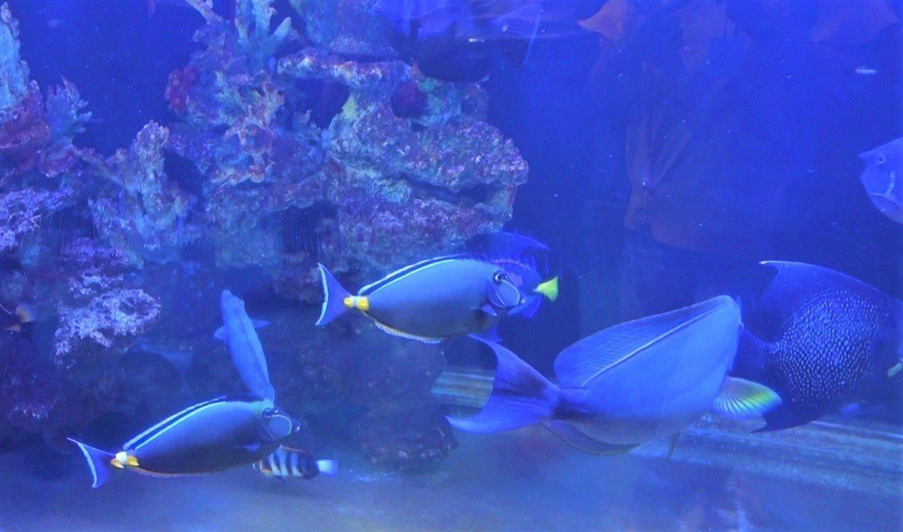 觀賞魚產業有7成以上集中屏東。 記者翁禎霞/攝影