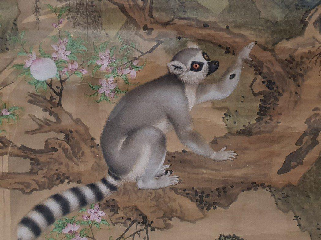郎世寧畫作「畫交阯果然」,「果然」就是狐猴。 記者陳宛茜/攝影