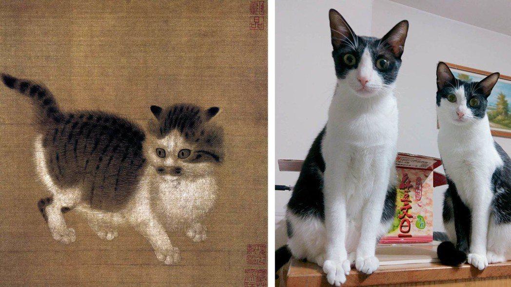 宋人稱貓為「狸奴」,現代人卻以「貓奴」自稱。 圖/記者陳宛茜攝影、聯合報系資料照...