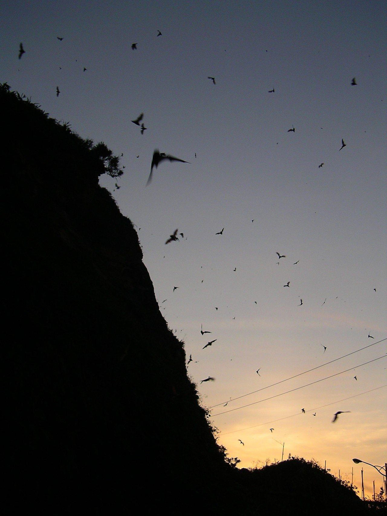 滿天的蝙蝠。圖/公路總局第一區養護工程處基隆工務段提供