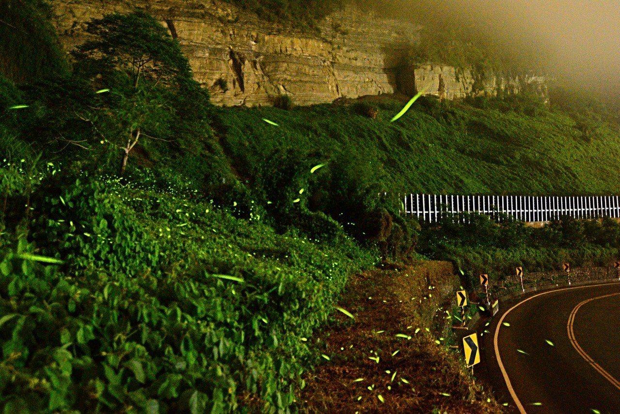 台18線阿里山公路的螢火蟲生態。圖/公路總局提供