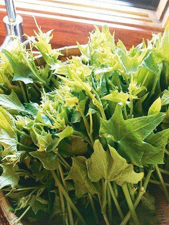 剪去龍鬚的龍鬚菜(右圖),不但視覺清爽,口感也變好。 圖╱朱慧芳