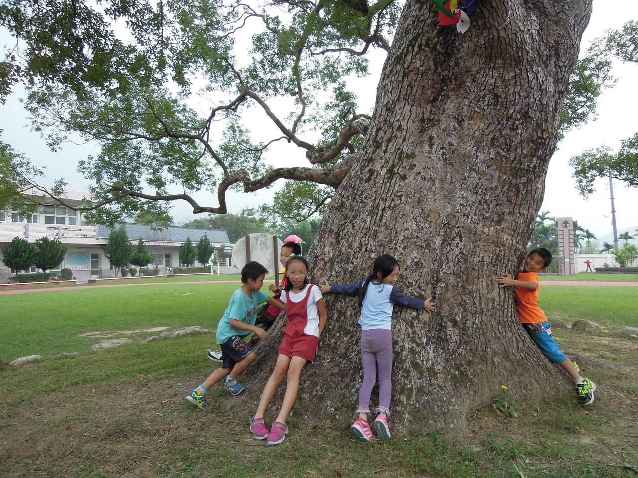 千年老樟樹險些變日本浴桶 苗栗老樹傳奇多