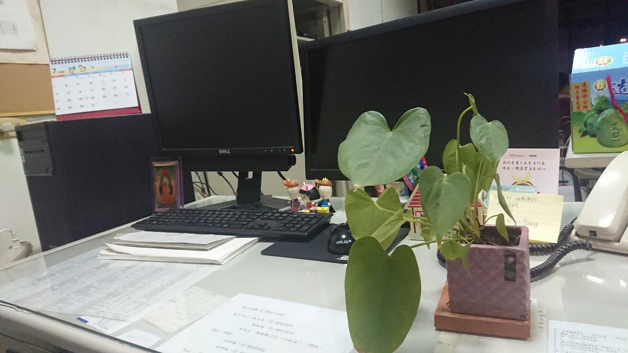 壞的植物衝擊生態 好的植物可淨化室內空氣