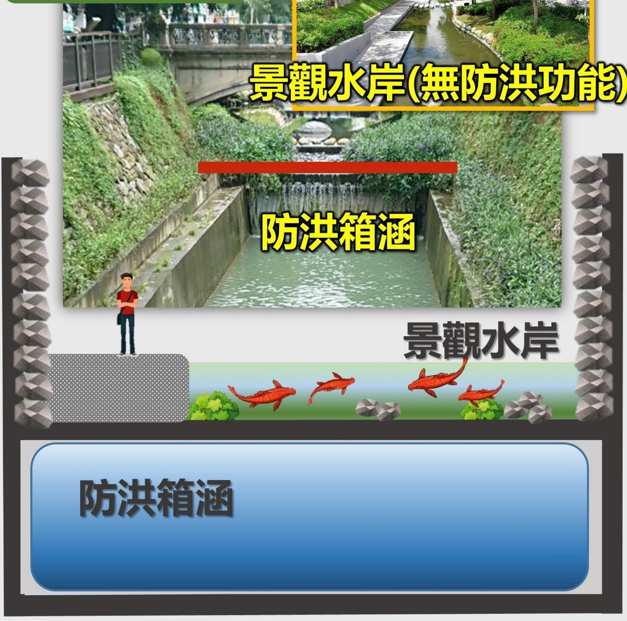 台中市府水利局表示,綠川整治後,河道內的魚因為無上下游水域,如同水族箱內的魚。圖...