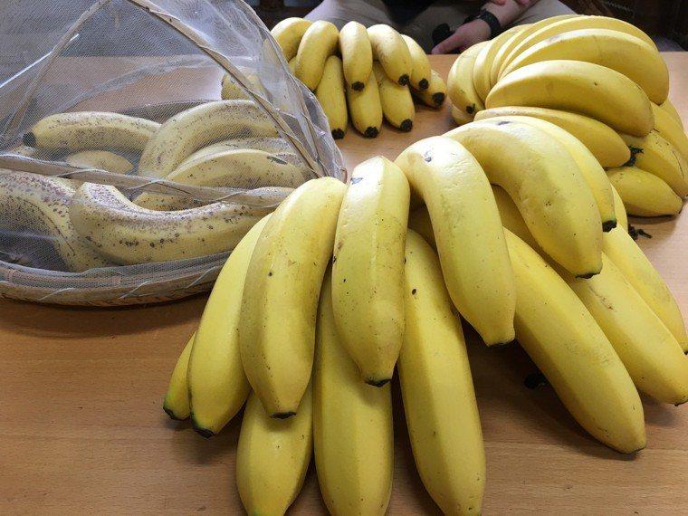 香蕉。記者陳雅玲/攝影